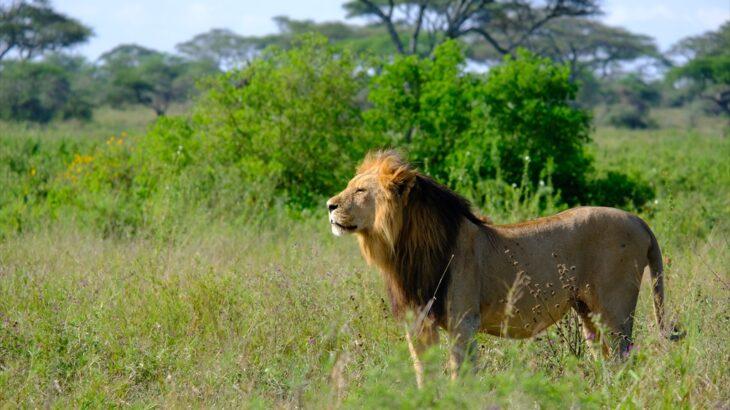 [タンザニア] セレンゲティ国立公園 自家用車でサファリに乗り込む三日間