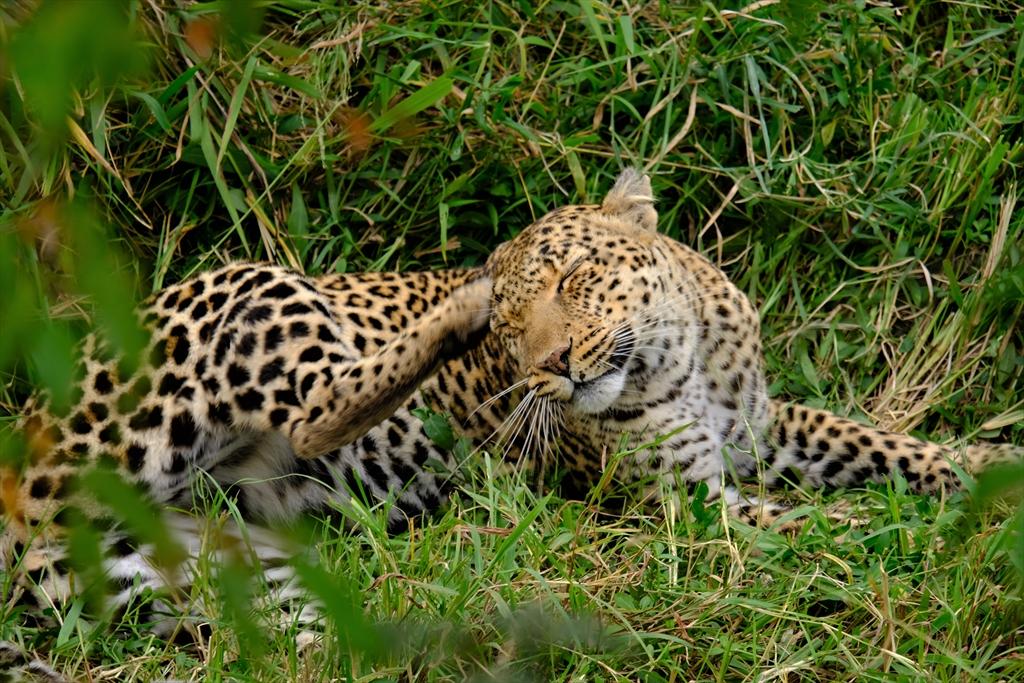 [ケニア] マサイ・マラ国立保護区でサファリ 大草原と野生動物に感動!