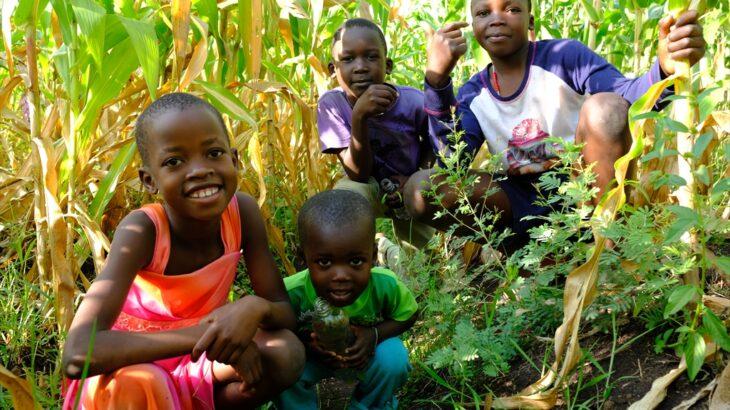 [ケニア] ヴィクトリア湖の近郊 ケニアの農村で暮らしてみて